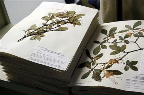 perierga.gr - Τα μισά δείγματα στα μουσεία Φυσικής Ιστορίας «έχουν λάθος ετικέτες»!