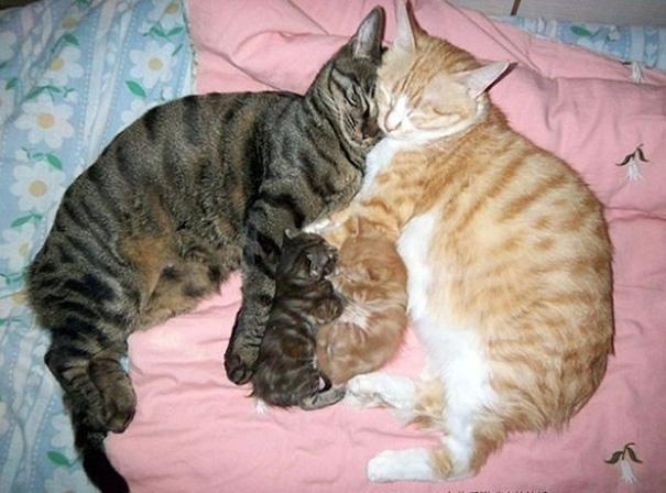 perierga.gr - Περήφανες μαμάδες γάτες με τα γατάκια τους!