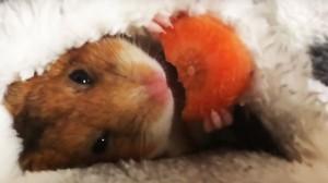 perierga.gr - Ο Mike τρώει το καρότο του πριν κοιμηθεί...