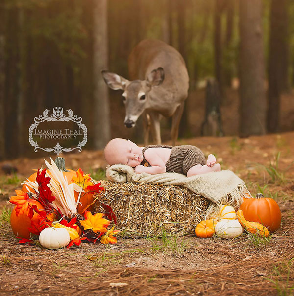 perierga.gr - Ξαφνική εμφάνιση ελαφιού σε φωτογράφιση μωρού!