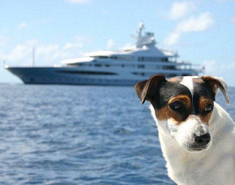 perierga.gr - Πολυταξιδεμένος σκύλος απολαμβάνει μοναδικές περιπέτειες!