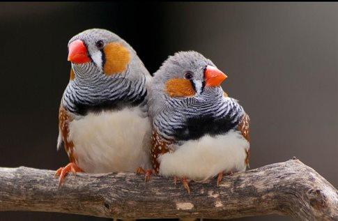 perierga.gr - Ακόμα και τα πουλιά έχουν συζυγικά καβγαδάκια!