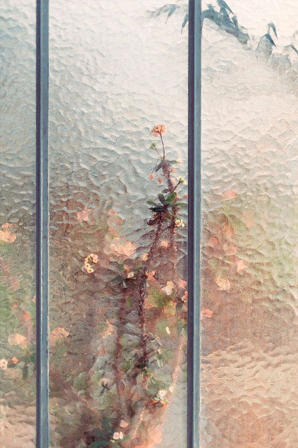 perierga.gr - Koιτάζοντας μέσα από το τζάμι ενός θερμοκηπίου...
