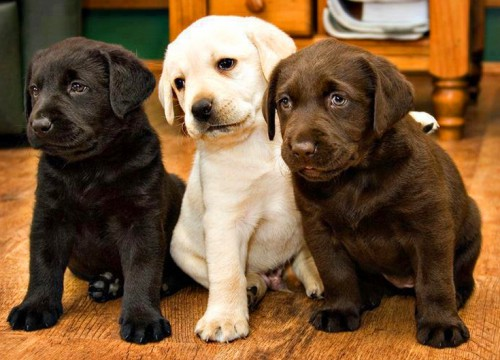 perierga.gr - Οι σκύλοι «διαβάζουν» τα συναισθήματα των άλλων σκυλιών!