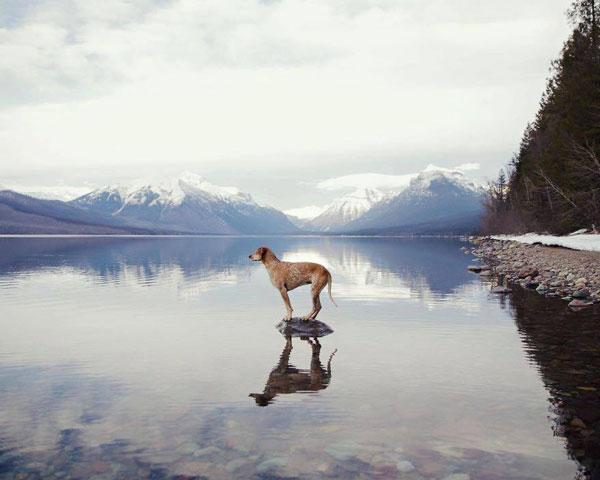perierga.gr - Φωτογράφος ταξιδεύει με τον σκύλο του και τραβά καλλιτεχνικές πόζες!