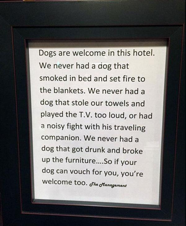perierga.gr - Ξενοδοχείο θεωρεί τους σκύλους πιο ευπρόσδεκτους από τους ανθρώπους!