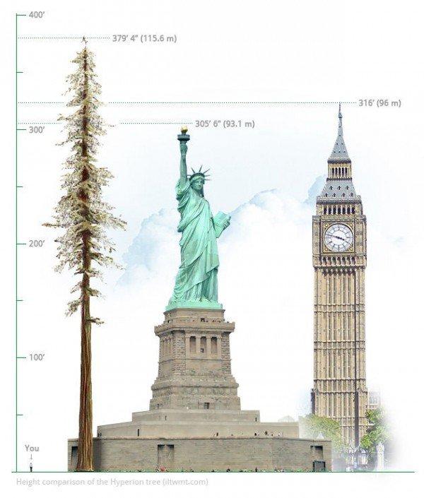 perierga.gr - Το ψηλότερο δέντρο στον κόσμο!