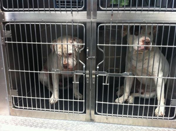 perierga.gr - Στα πιο σοβαρά κακουργήματα κατατάσσει το FBI την κακοποίηση ζώων