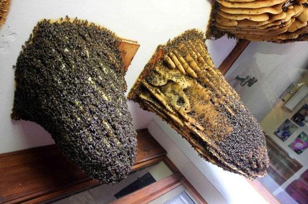 "perierga.gr - Πρωτότυπο ""Μουσείο Μελισσών!"