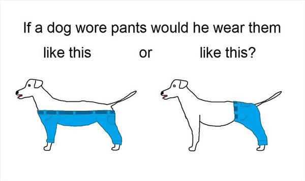 perierga.gr - Ώρα για... σοβαρές ερωτήσεις. Πώς θα έπρεπε να ντύνονται τα ζώα;