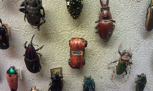 "perierga.gr - Κάποιος έχει χιούμορ στο ""Μουσείο Σκαραβαίων""!"