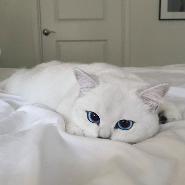 perierga.gr - Γάτα με τα πιο όμορφα μάτια!