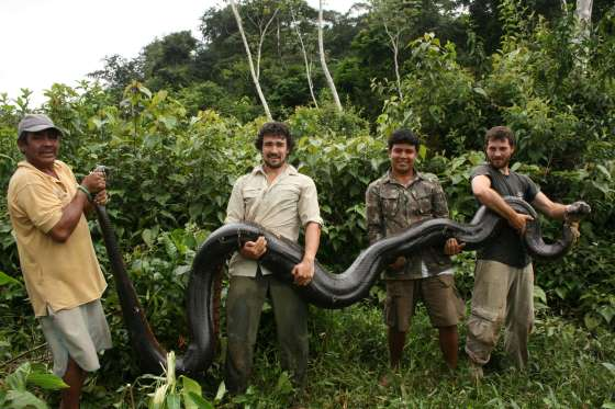perierga.gr - Eντυπωσιακές πληροφορίες για τα φίδια!
