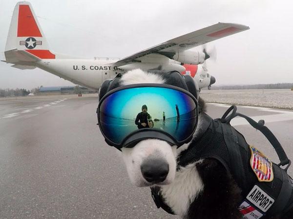 perierga.gr - Δείτε το σκυλί που δουλεύει σαν... σκυλί σε αεροδρόμιο!