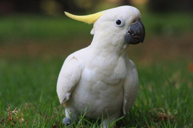 perierga.gr - Τα πιο έξυπνα πουλιά του κόσμου!