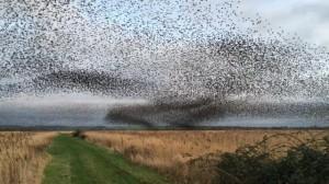 perierga.gr - Ο χορός των πουλιών στον ουρανό!