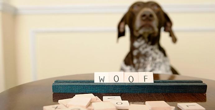 perierga.gr - Η νοημοσύνη των σκύλων μπορεί να μετρηθεί με τεστ IQ!