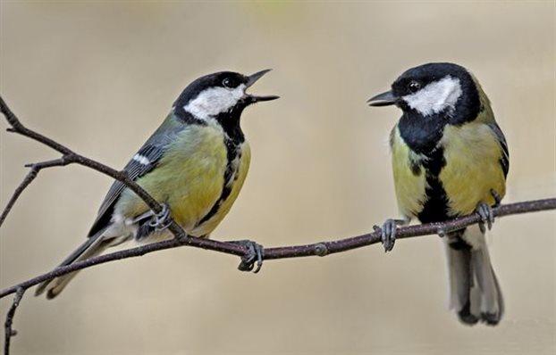 Perierga.gr - Το πτηνό που «μιλάει» με σύνταξη