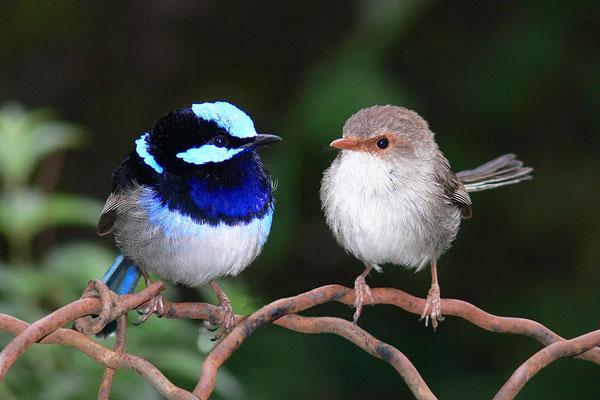 perierga.gr - Αρσενικά ζώα διαφορετικά από τα θηλυκά τους!