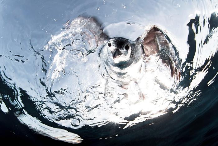 perierga.gr - Eντυπωσιακές εικόνες από το διαγωνισμό υποβρύχιας φωτογραφίας!