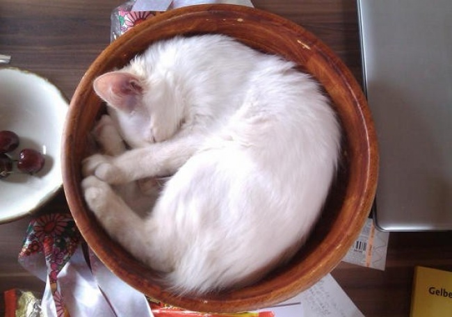 perierga.gr - Παράξενα μέρη που... συχνάζουν οι γάτες!