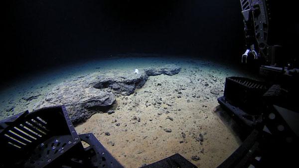perierga.gr - Ανακαλύφθηκε ημιδιάφανο χταπόδι στο βυθό της Χαβάης!
