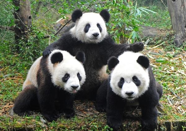 Perierga.gr - Τα χαριτωμένα πάντα κοστίζουν εκατομμύρια στους ζωολογικούς κήπους