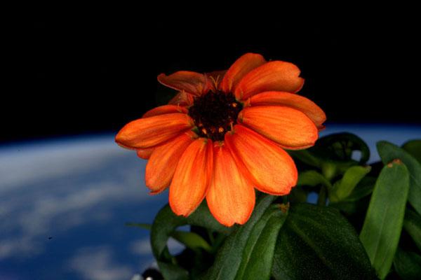 perierga.gr - H NASA παρουσιάζει τις 10 καλύτερες φωτογραφίες του Scott Kelly!