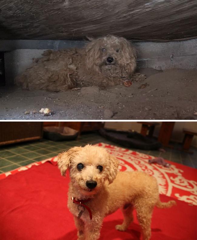 perierga.gr - Εγκαταλειμμένα σκυλιά σώθηκαν την κατάλληλη στιγμή!
