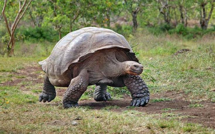 perierga.gr - Τα 10 πιο αργά ζώα του κόσμου!