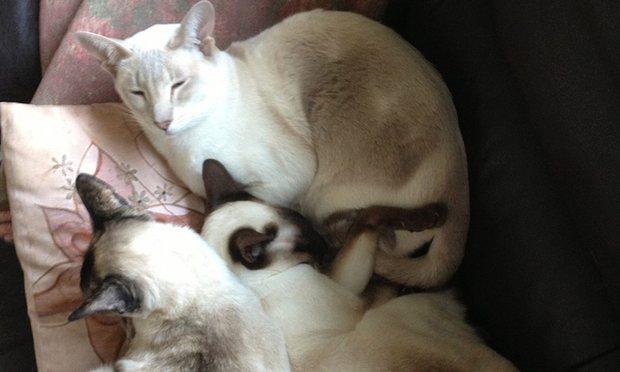 perierga.gr - Γάτα έζησε επί 8 μέρες μέσα σε πακέτο που ταχυδρομήθηκε!