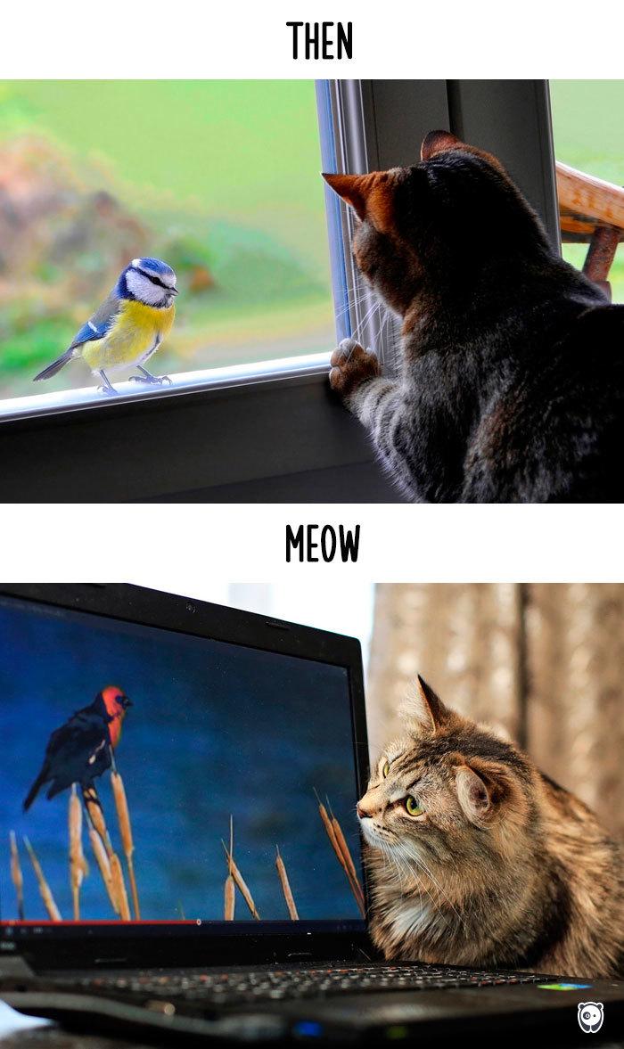 perierga.gr - Πώς η τεχνολογία άλλαξε τη ζωή των γατών!