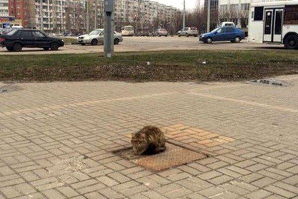 perierga.gr - Γάτα... Χάτσικο περιμένει τον ιδιοκτήτη της για πάνω από 1 χρόνο!
