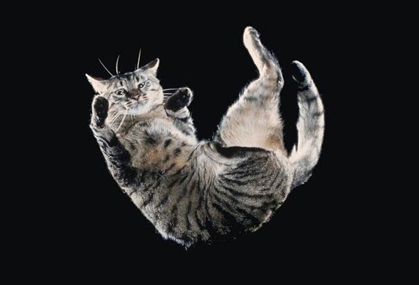 perierga.gr - Πώς οι γάτες προσγειώνονται πάντα με τα πόδια;