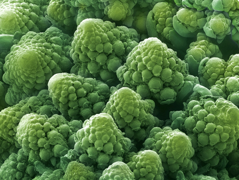 perierga.gr - Eντυπωσιακές φωτογραφίες τροφών στο μικροσκόπιο!