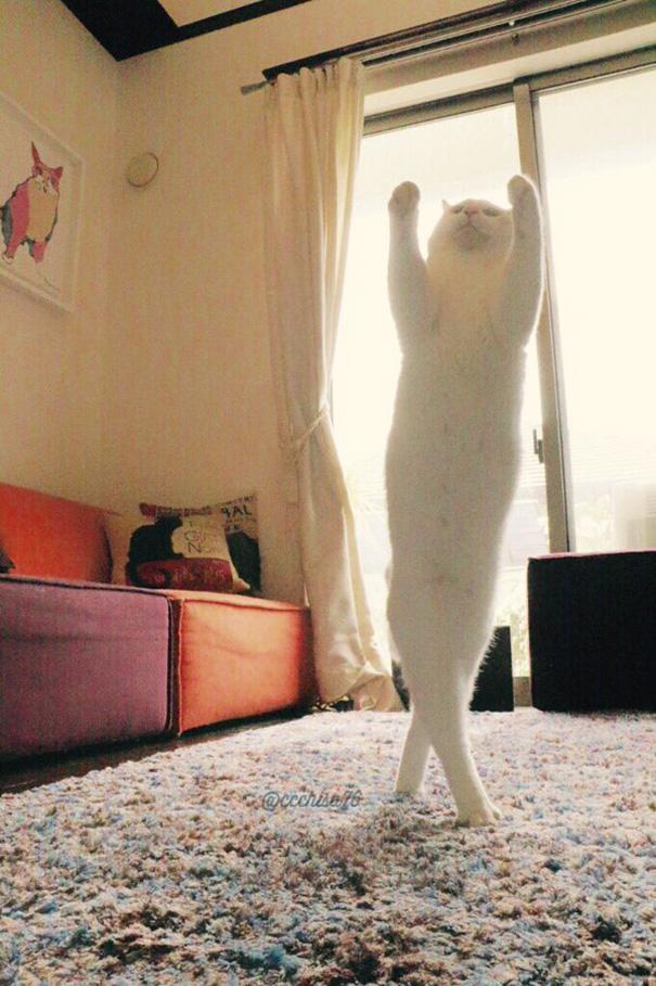 perierga.gr - Γάτα χορεύει... μπαλέτο και γίνεται viral!