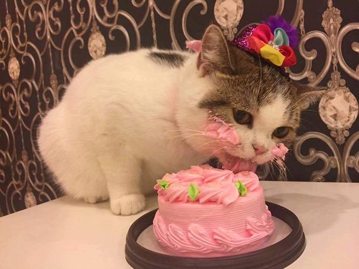 perierga.gr - Γάτα απολαμβάνει το κέικ γενεθλίων της και γίνεται viral!
