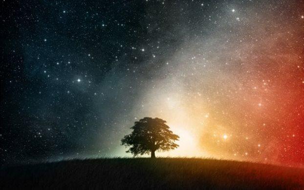 perierga.gr - Τα δέντρα κοιμούνται το βράδυ!