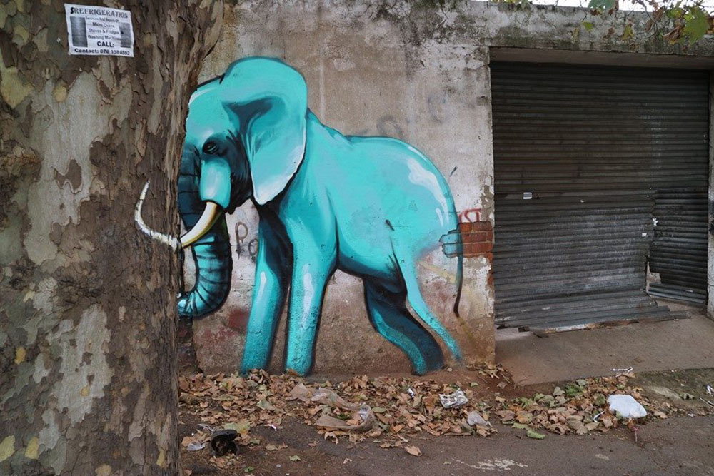 perierga.gr - Ελέφαντες γέμισαν τους δρόμους της Νότιας Αφρικής!