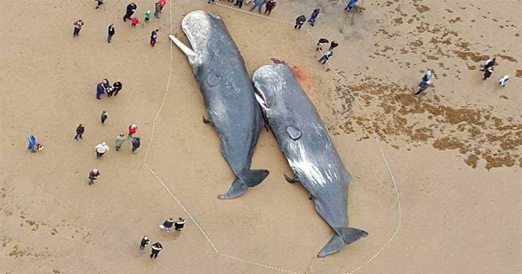 perierga.gr - Φάλαινες βρέθηκαν γεμάτες με πλαστικά και εξαρτήματα αυτοκινήτου!