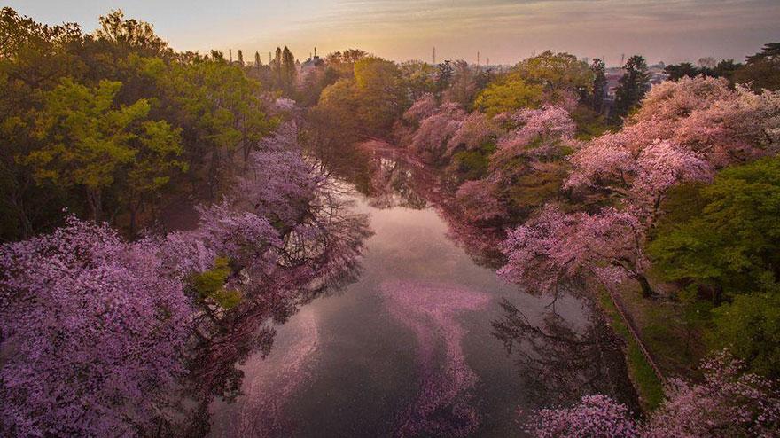 perierga.gr - Oι κερασιές βάφουν λίμνη στην Ιαπωνία!