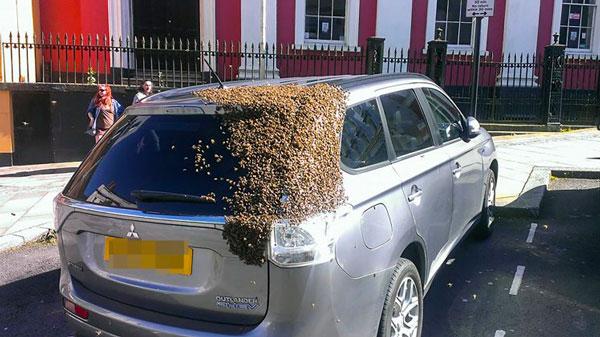 perierga.gr - Γιατί 20.000 μέλισσες ακολουθούσαν ένα αμάξι επί δύο μέρες;