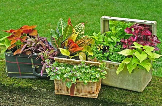 perierga.gr - Πρωτότυπες γλάστρες για τα φυτά!