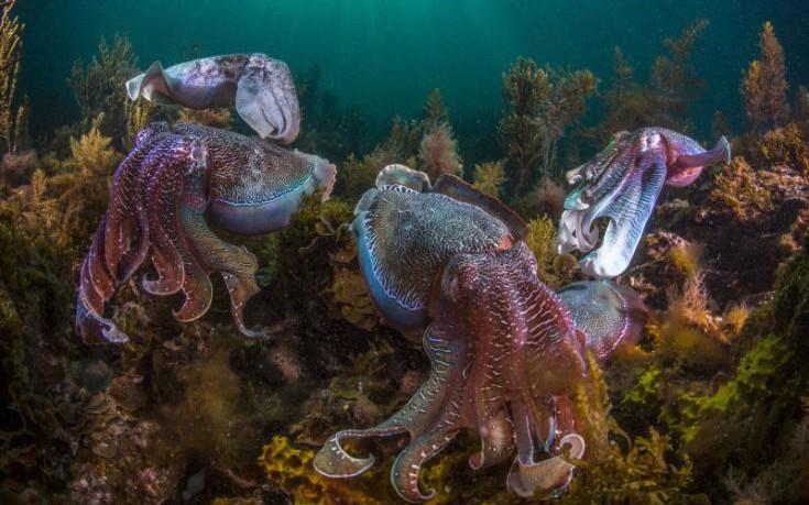 perierga.gr - Χταπόδια, καλαμάρια και σουπιές «κατακτούν» τις θάλασσες της Γης!