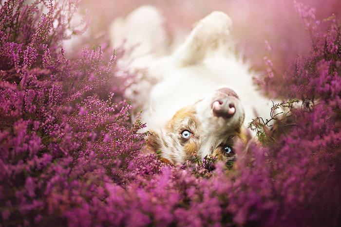 perierga.gr - 12 ονειρικά πορτρέτα σκύλων!