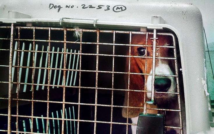 perierga.gr - Σκύλοι πειραματόζωα βλέπουν το φως του ήλιου για πρώτη φορά!
