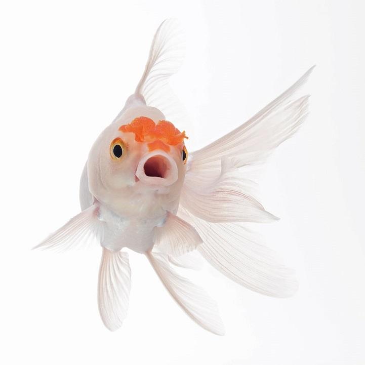 perierga.gr - Πανέμορφα πορτρέτα ψαριών!