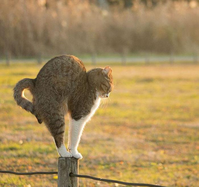 perierga.gr - Φωτογραφίζοντας αδέσποτες γάτες στην Ιαπωνία!