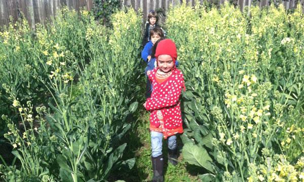 perierga.gr - Σχολείο-φάρμα μαθαίνει τα παιδιά να καλλιεργούν λαχανικά!
