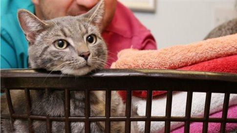 perierga.gr - Επέζησε γάτος που «πλύθηκε» στο πλυντήριο στους 60 βαθμούς!